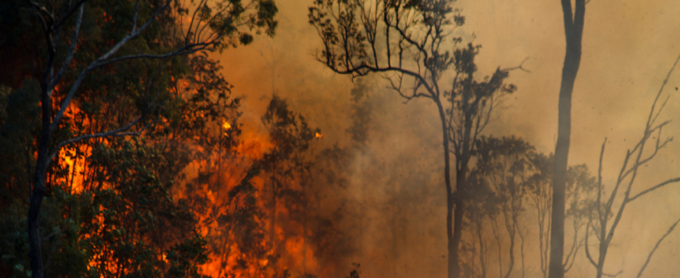 Record Fires and Budget Constraints Trap U.S. Forest Service in a Catch-22