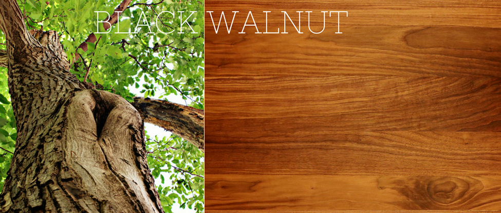 The Magic of Walnut Hardwood